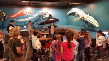 Sommerferien: Zoologisches Museum